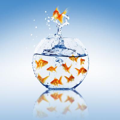 Meerdere goudvissen